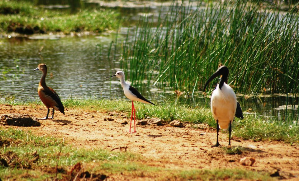 Yala National Park Sri Lanka