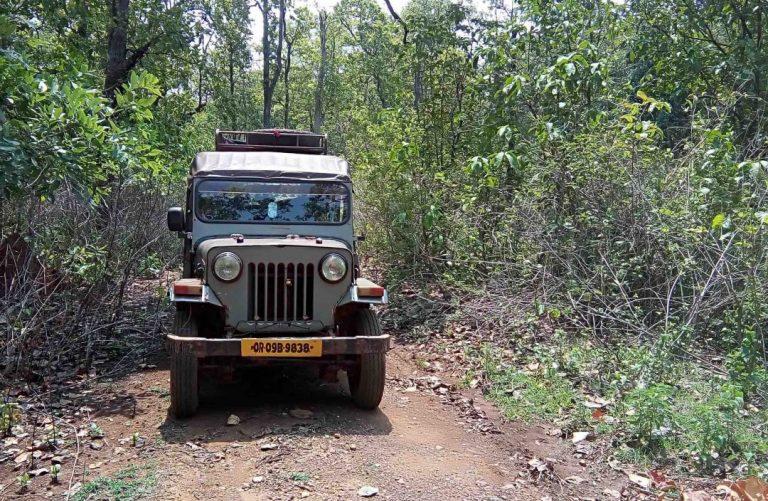 Saranda forest