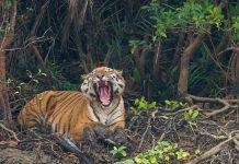 Sundarban Bangladesh